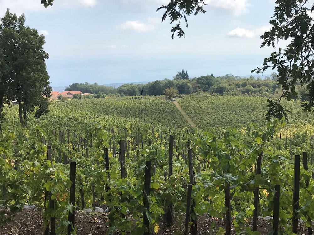 Tastes of Italy: Volcanic Wines For An Explosive Festive Season